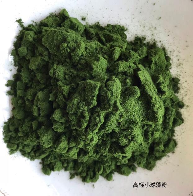 高标小球藻粉
